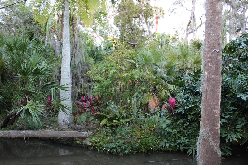 Arbres dans le jardin botanique à l'Institut de Technologie de la Floride, Melbourne la Floride photos stock