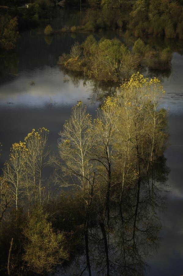 Arbres dans le lac Skadar image stock