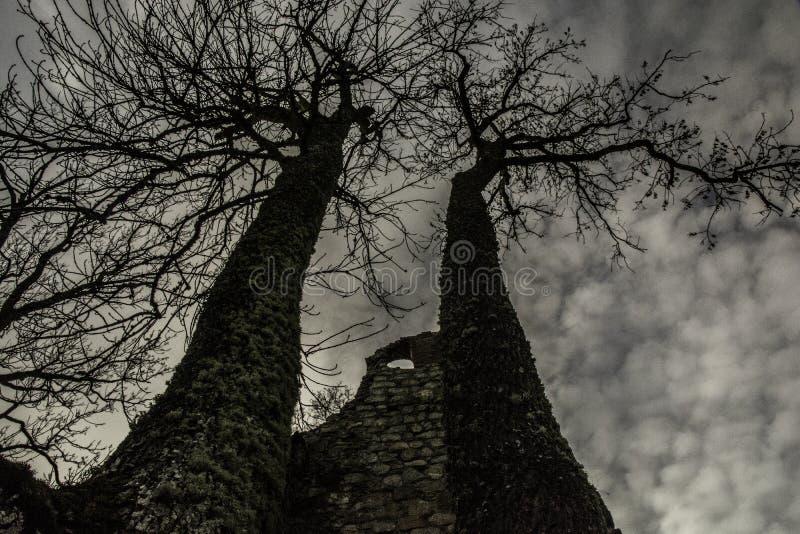 Arbres dans les ruines photographie stock libre de droits
