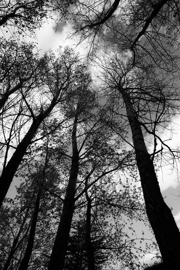 Arbres dans un bois photos libres de droits