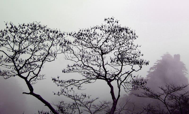 Arbres dans un brouillard photographie stock libre de droits
