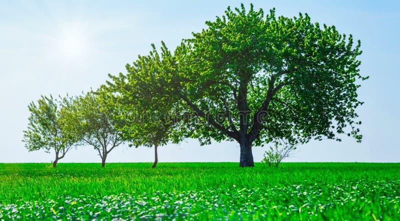 Arbres dans un domaine Concept de la famille de legs de croissance de génération photo stock