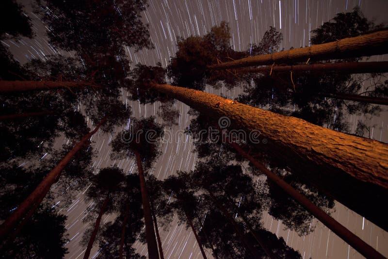 Arbres dans une forêt avec des journaux d'étoile photographie stock libre de droits