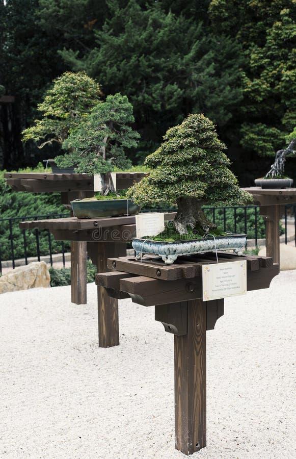 Arbres de bonsaïs photographie stock