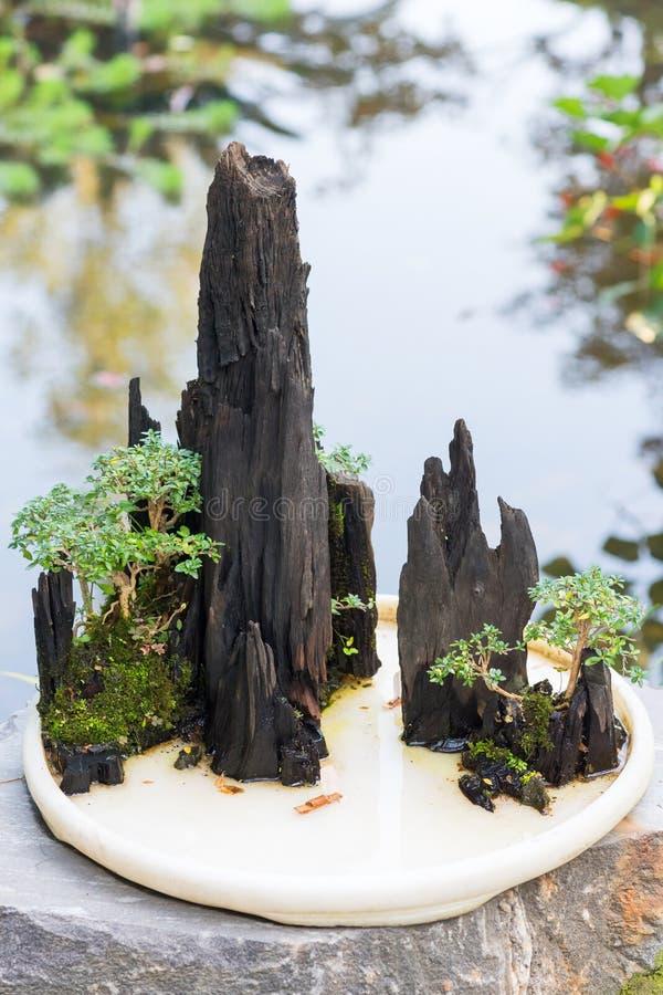Arbres de bonsaïs sur une roche avec un étang à l'arrière-plan image stock