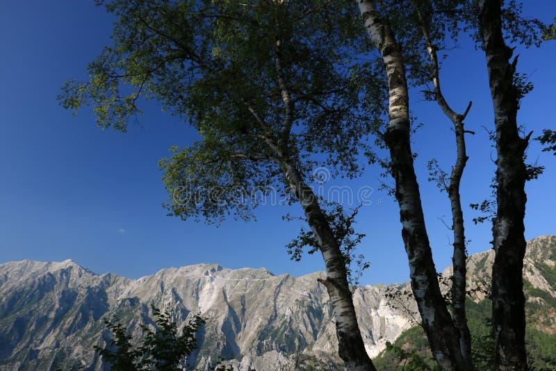 Arbres de bouleau dans les Alpes d'Apuan dans Versilia ? l'arri?re-plan images stock
