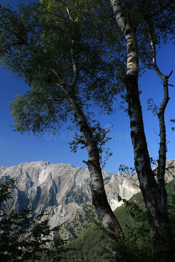 Arbres de bouleau dans les Alpes d'Apuan dans Versilia ? l'arri?re-plan photo stock