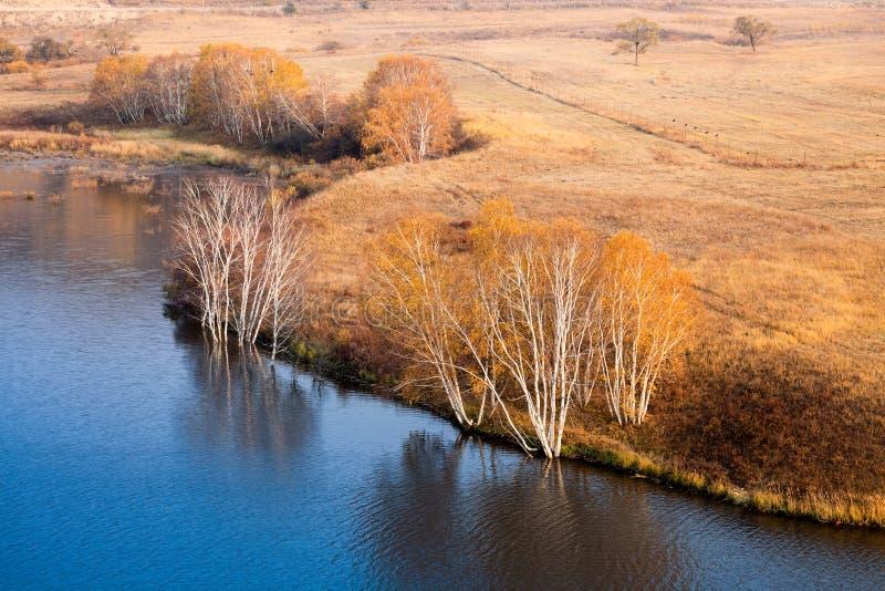 Arbres de bouleau de Waterside en automne images libres de droits
