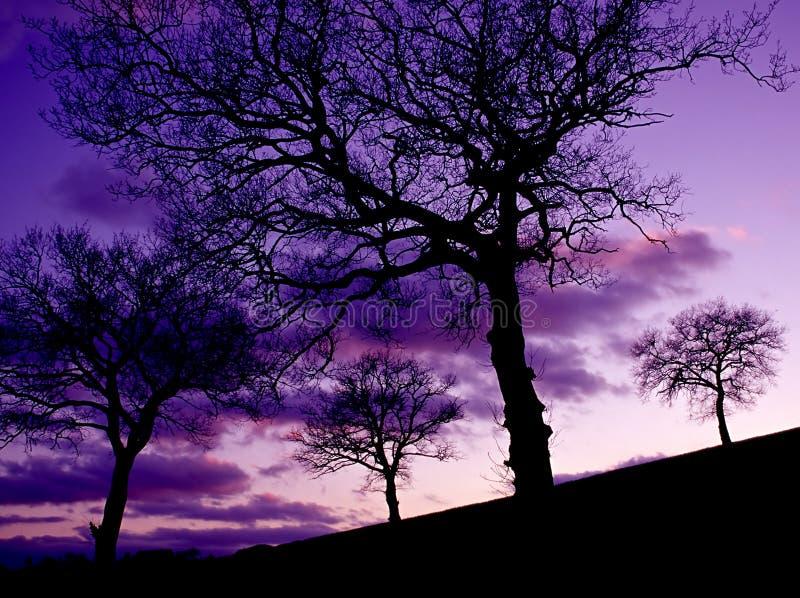 Arbres de chêne au coucher du soleil photographie stock