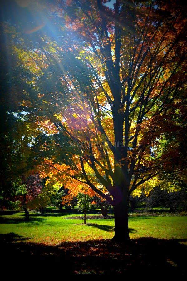 Arbres de chute avec la lumière du soleil photographie stock libre de droits
