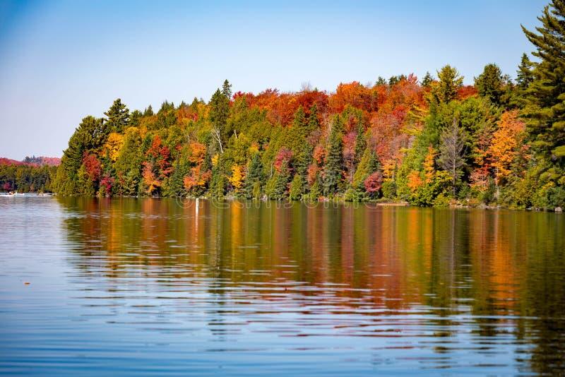Arbres de chute avec le lac images libres de droits