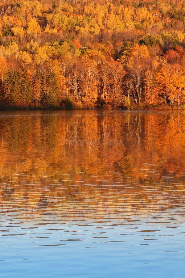 Arbres de chute dans le Canada du Nouveau Brunswick photos libres de droits