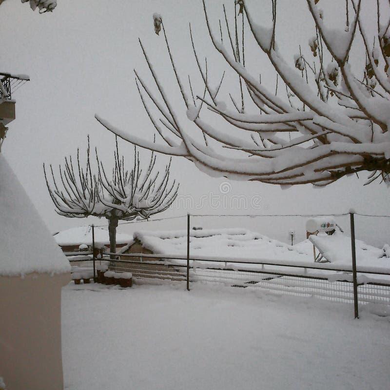 Arbres de chute de neige image stock