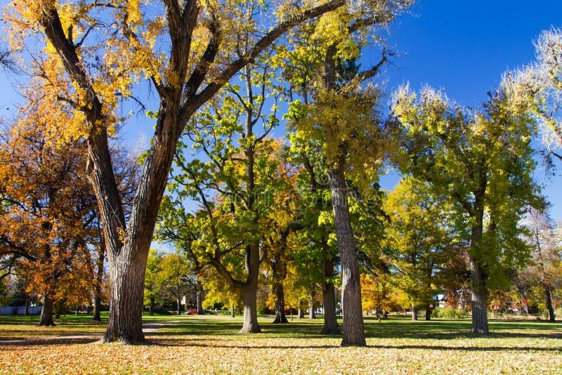 Arbres de chute en parc de ville - Denver, le Colorado photographie stock libre de droits