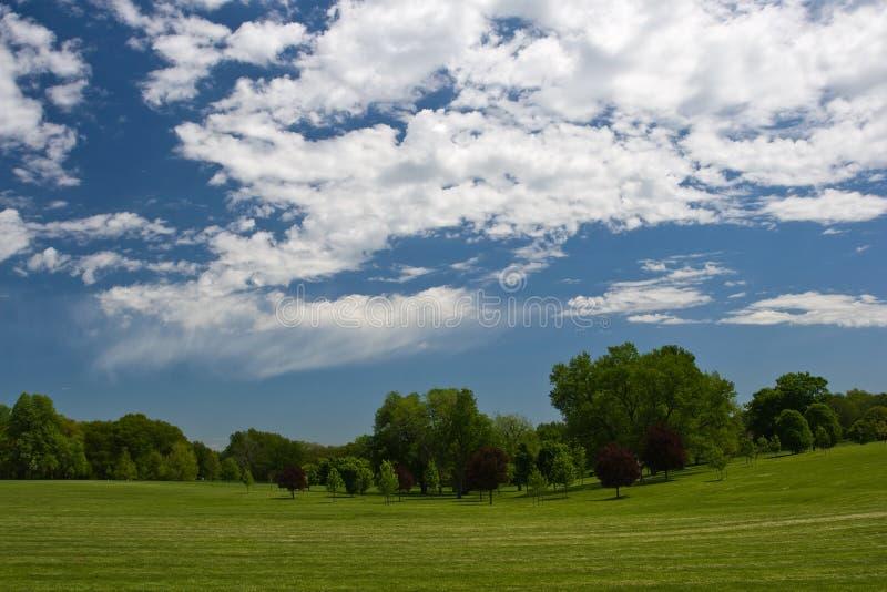 arbres de ciel de vert bleu photo stock