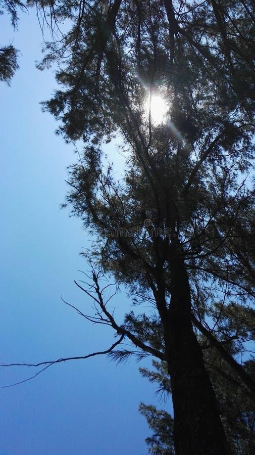 Arbres de ciel de lumière du soleil image stock