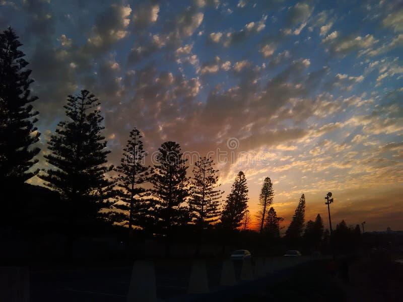 Arbres de coucher du soleil photos libres de droits