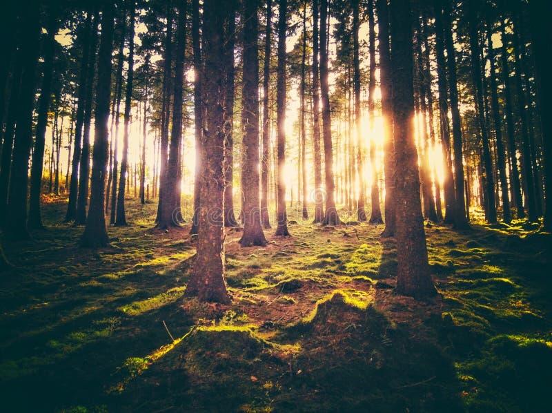 Arbres de coucher du soleil photographie stock