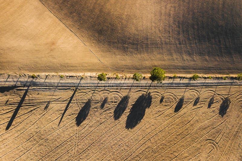 Arbres de cyprès abstraits de vue de bourdon dans la lumière de coucher du soleil photographie stock libre de droits