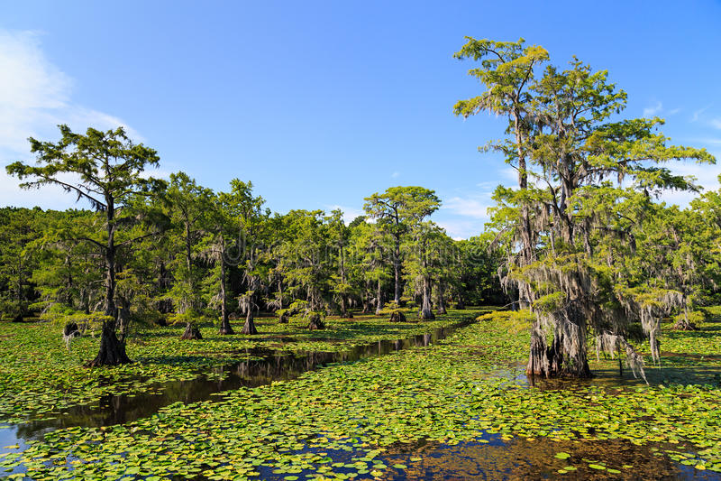 Arbres de Cypress au lac Caddo image stock