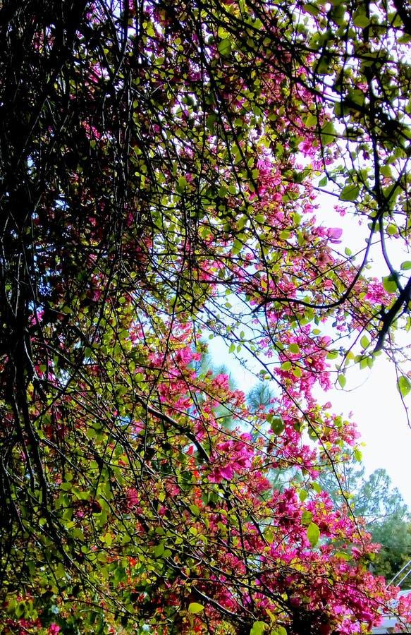 Arbres de Flowersand image stock