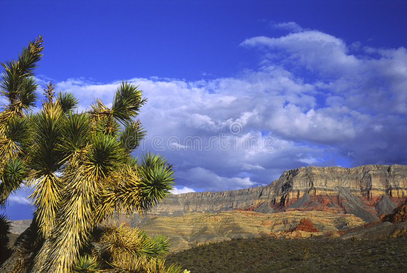 Arbres de Joshua en Utah photo libre de droits