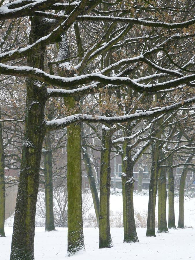 Arbres de l'hiver photo libre de droits