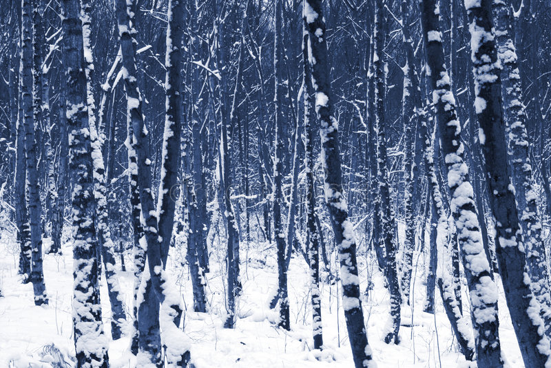 Arbres de l'hiver dans la neige images stock