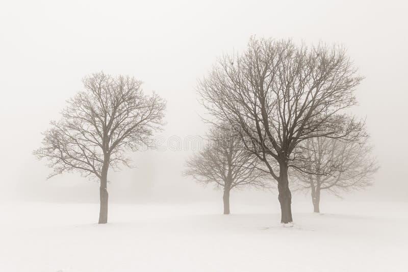Arbres de l'hiver en regain image stock