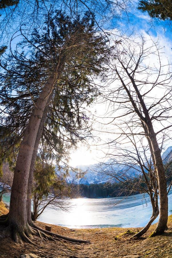 Arbres de lac mountain photographie stock