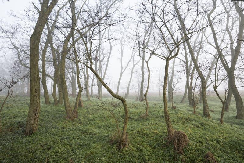 Arbres de matin en parc dans la chute dans le brouillard image libre de droits