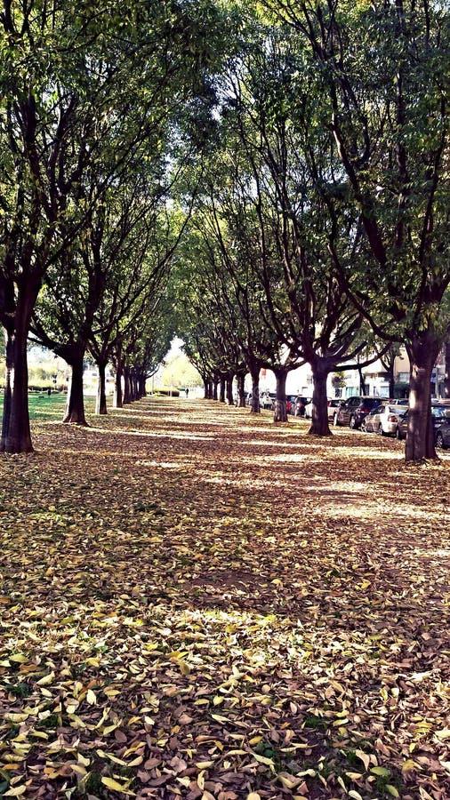 Arbres de Milan photo libre de droits