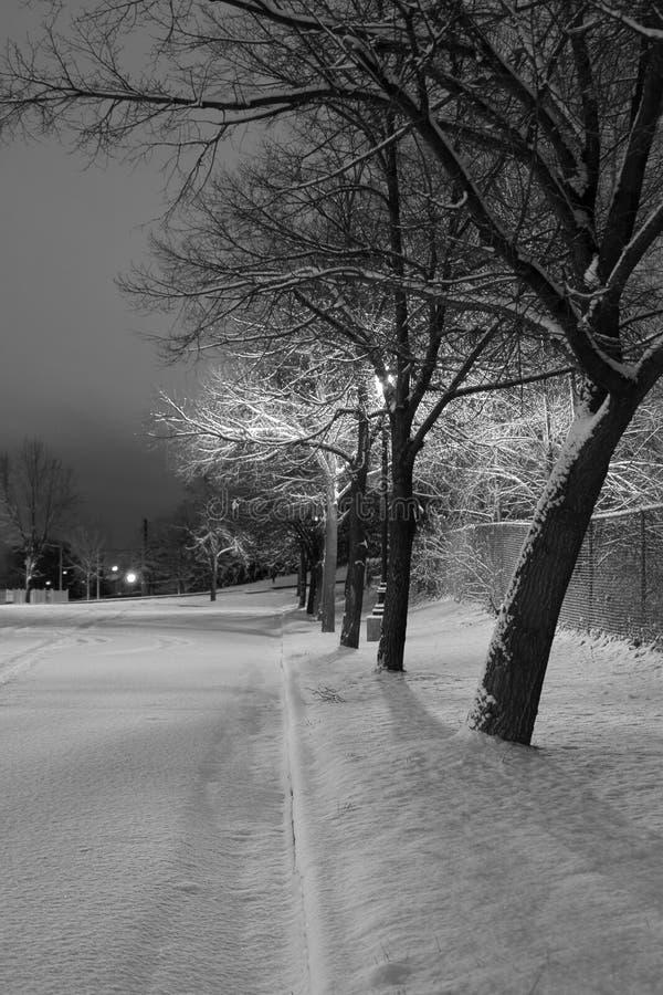 Arbres de Milou dans une ligne dans le thème de l'hiver de stationnement images stock