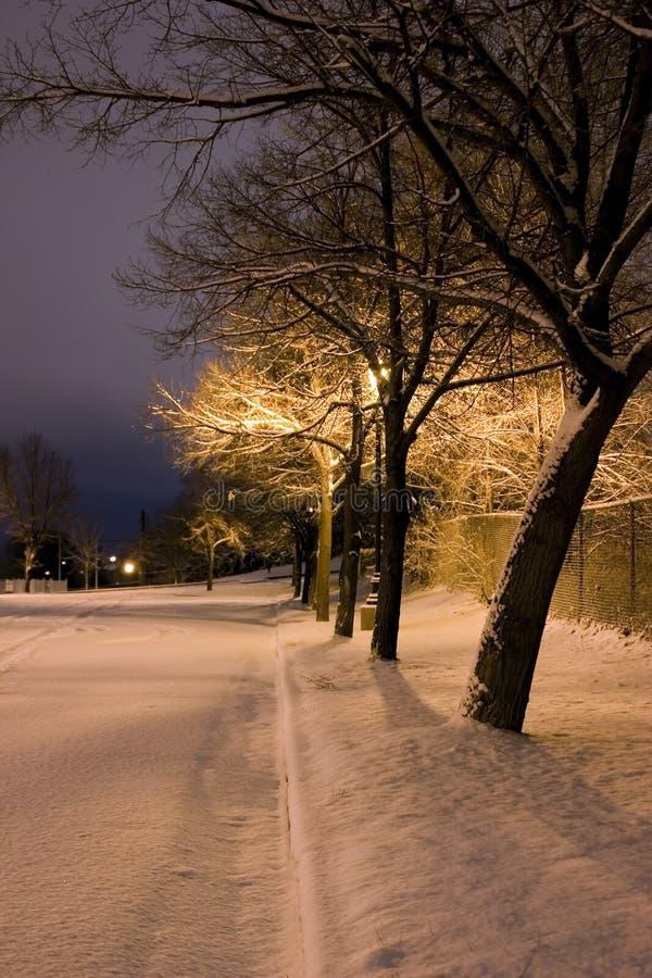 Arbres de Milou dans une ligne dans le thème de l'hiver de stationnement image stock