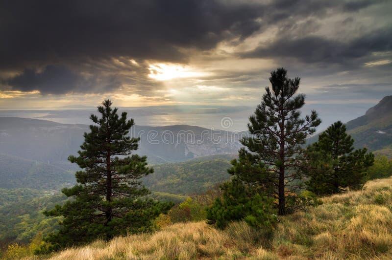 Arbres de montagne de coucher du soleil photos stock