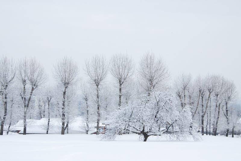 arbres de neige photographie stock