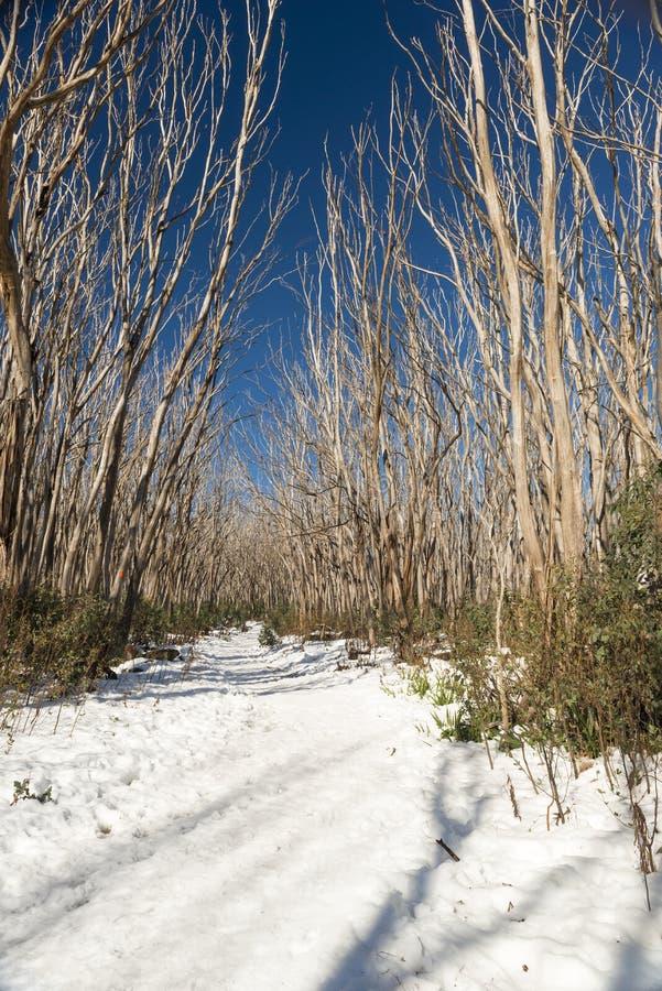 Arbres de neige photos stock