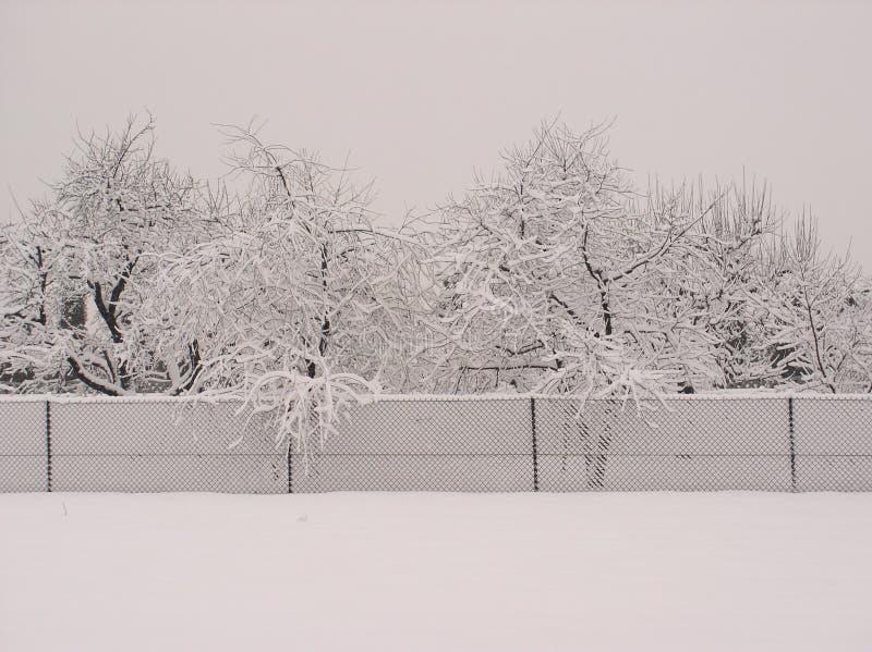 Arbres de neige images libres de droits
