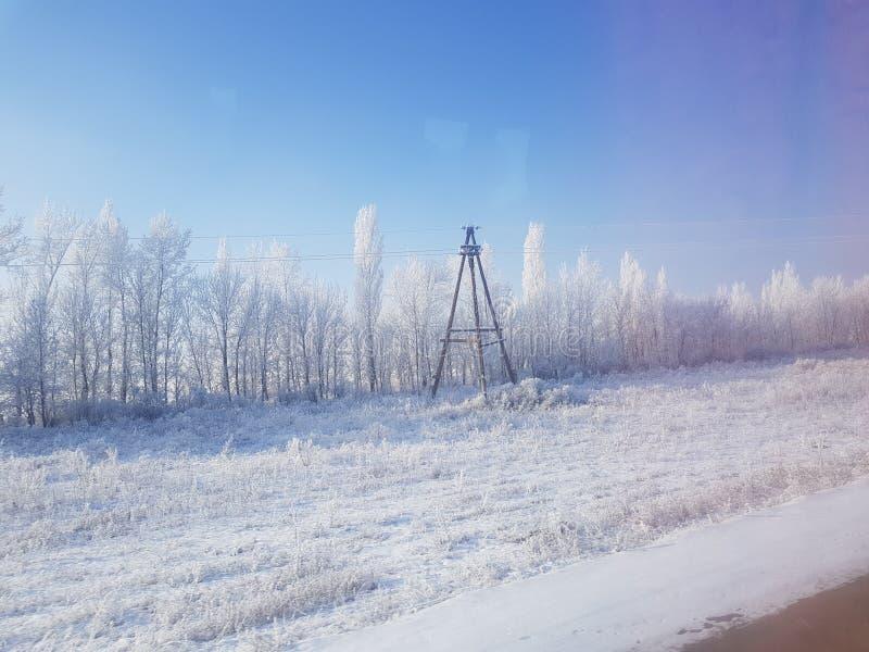 Arbres de neige d'hiver images stock