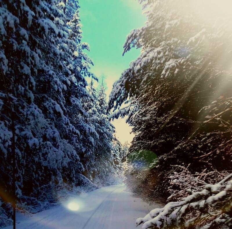 Arbres de neige d'hiver image stock