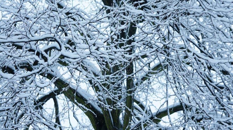 Arbres de neige d'hiver, route de parc, rangées blanches d'arbre d'allée photo libre de droits