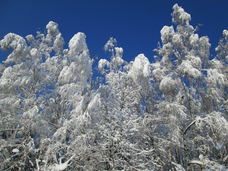 Arbres de neige sur le soleil photos stock