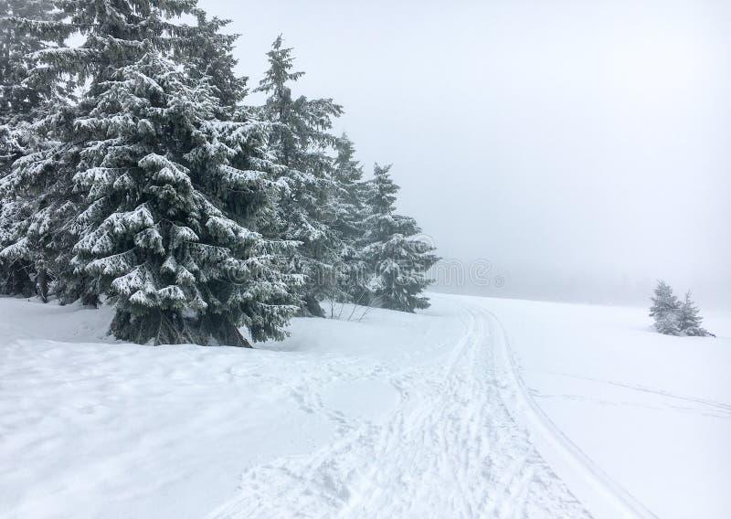 Arbres de Noël couverts de neige contre le brouillard dur sur un flanc de montagne neigeux image stock