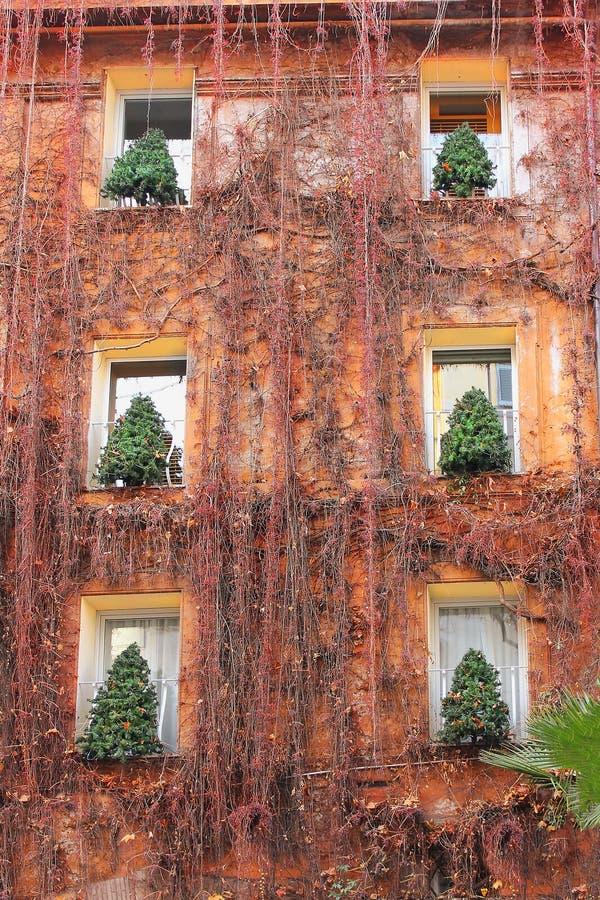Arbres de Noël dans les fenêtres de la maison à Rome photographie stock libre de droits
