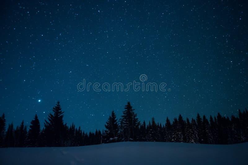 Arbres de Noël sur le fond du ciel étoilé d'hiver photos libres de droits