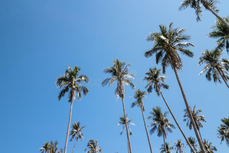 Arbres de noix de coco qui regardent de dessous avec le ciel lumineux à l'arrière-plan en été en Koh Mak Island chez Trat, Thaïla images stock