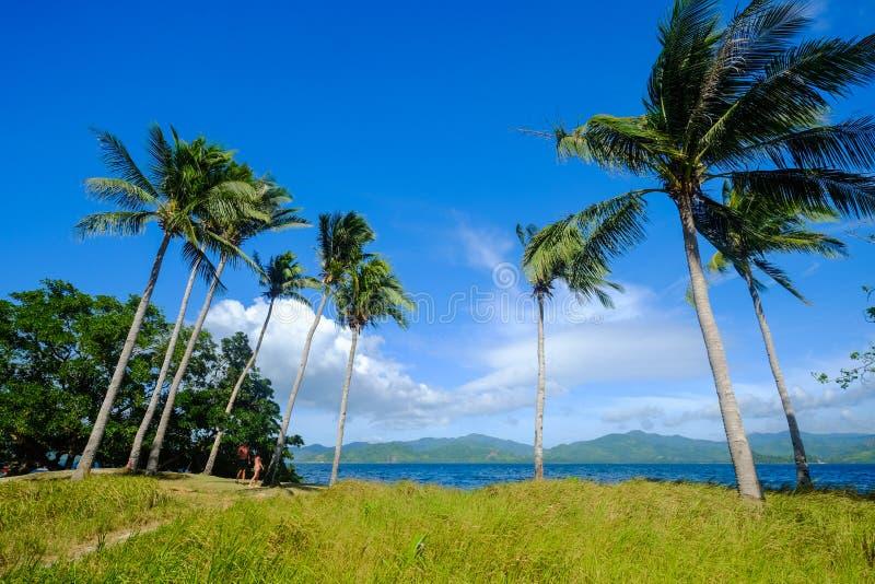 Arbres de noix de coco sur l'île de Coron, Philippines photographie stock libre de droits