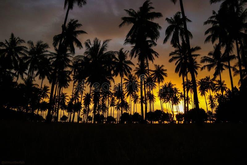 Arbres de noix de coco sur le coucher du soleil photos stock