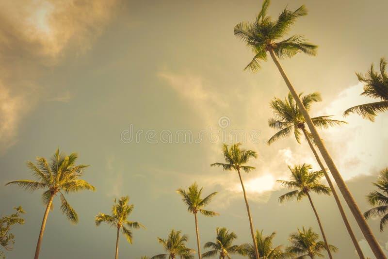 Arbres de noix de coco à l'arrière-plan de ciel d'été, ton de vintage photo stock
