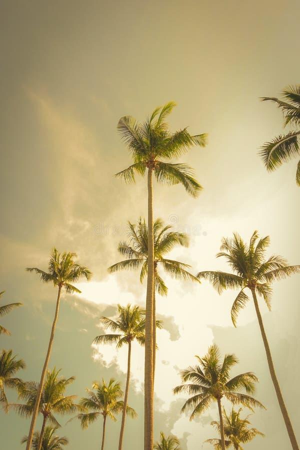 Arbres de noix de coco à l'arrière-plan de ciel d'été, ton de vintage photographie stock libre de droits